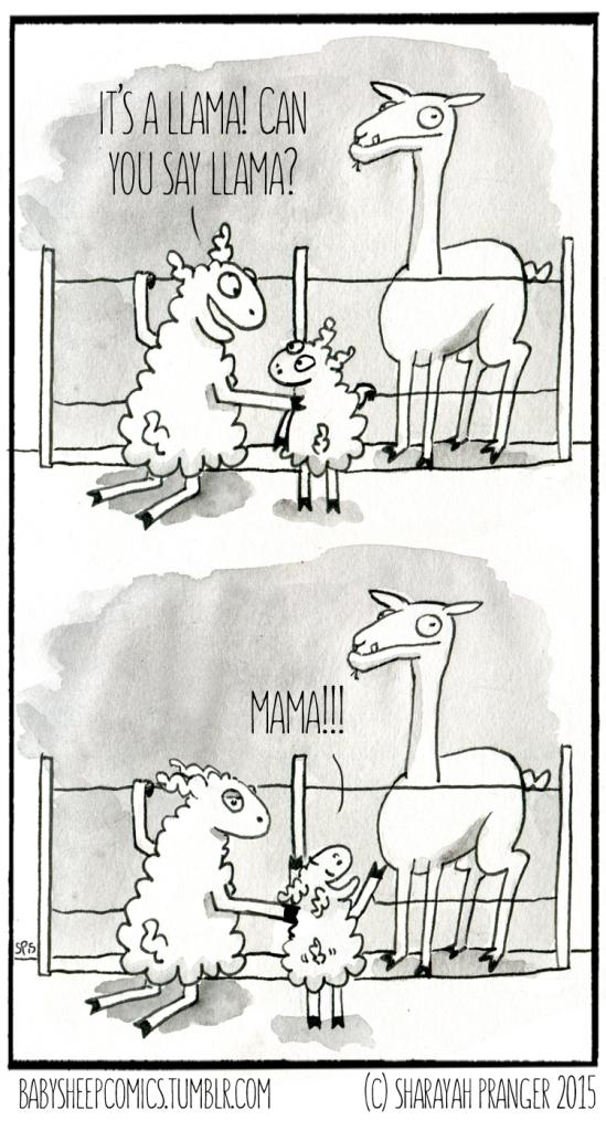 baby sheep 54